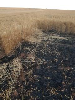 burnt crops at bushfire in wheatbelt