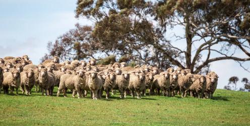 Coerco Livestock Troughs - Sheep Australia